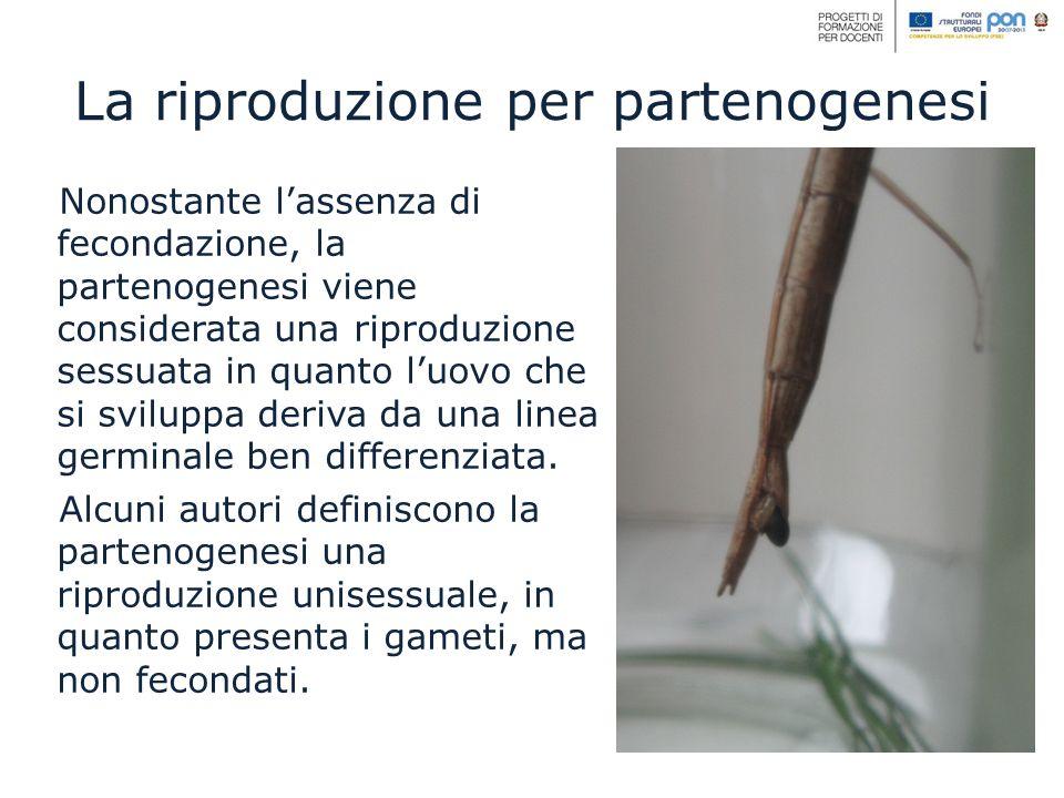 Nonostante lassenza di fecondazione, la partenogenesi viene considerata una riproduzione sessuata in quanto luovo che si sviluppa deriva da una linea