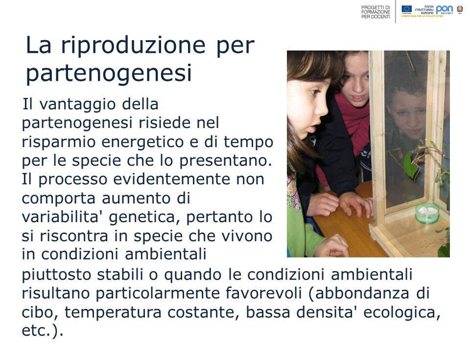 Il vantaggio della partenogenesi risiede nel risparmio energetico e di tempo per le specie che lo presentano. Il processo evidentemente non comporta a