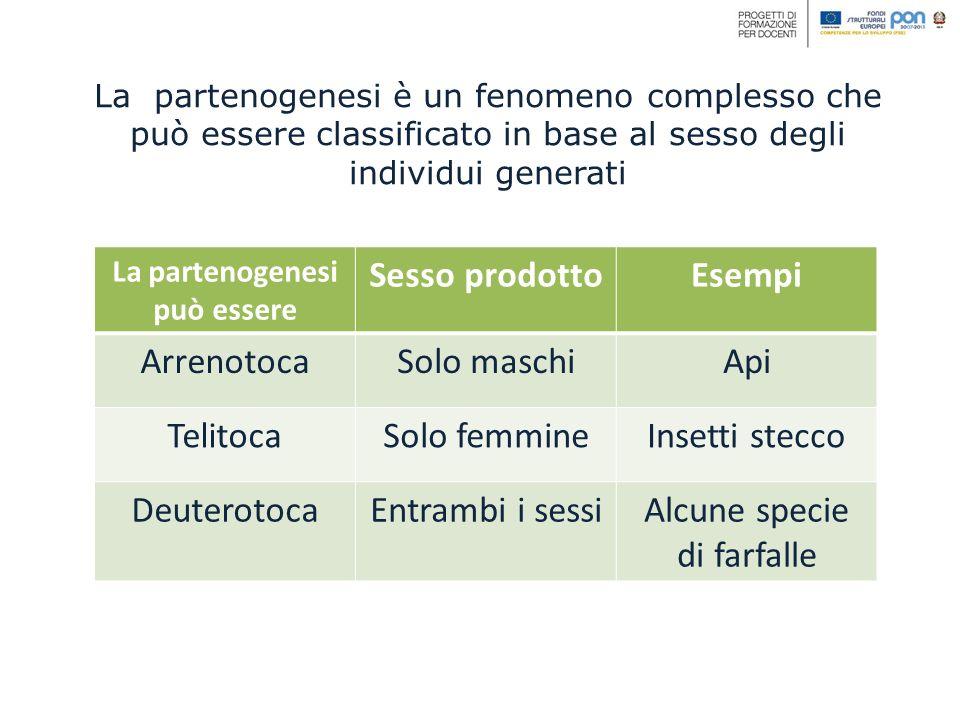 La partenogenesi è un fenomeno complesso che può essere classificato in base al sesso degli individui generati La partenogenesi può essere Sesso prodo
