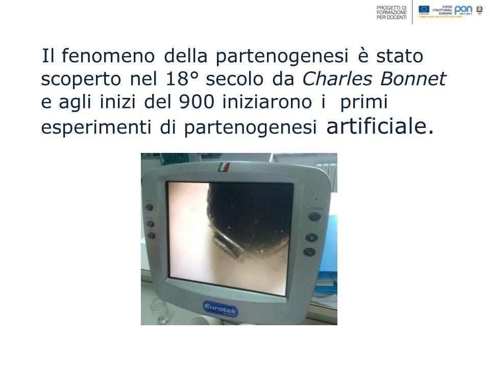 Il fenomeno della partenogenesi è stato scoperto nel 18° secolo da Charles Bonnet e agli inizi del 900 iniziarono i primi esperimenti di partenogenesi