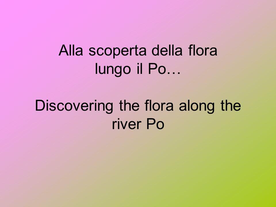 Alla scoperta della flora lungo il Po… Discovering the flora along the river Po