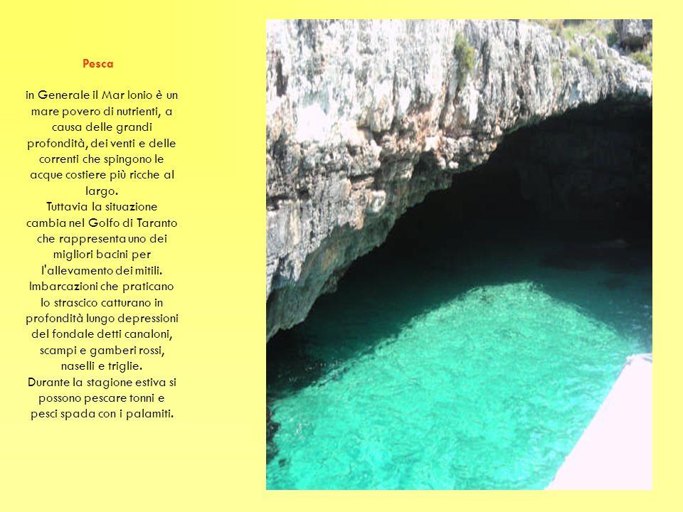 Pesca in Generale il Mar Ionio è un mare povero di nutrienti, a causa delle grandi profondità, dei venti e delle correnti che spingono le acque costie