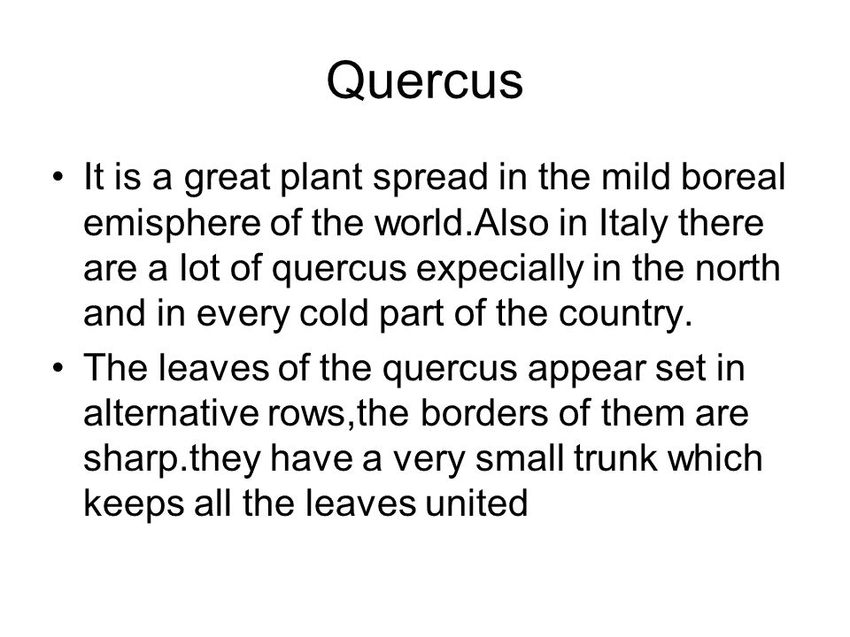 Quercus It is a great plant spread in the mild boreal emisphere of the world.Also in Italy there are a lot of quercus expecially in the north and in e
