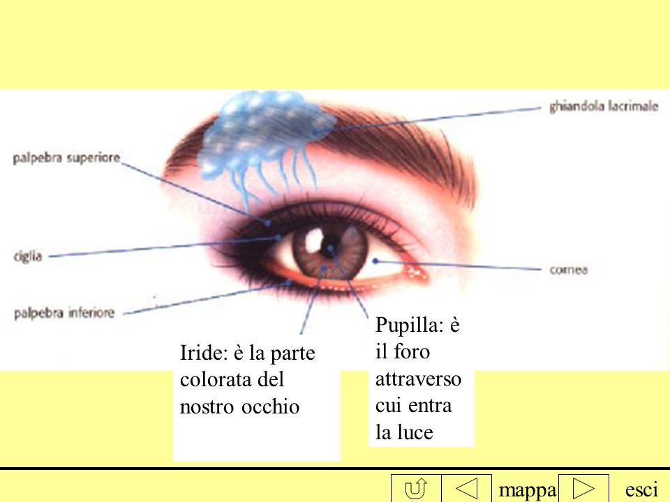 mappaesci La prof ci ha consegnato uno specchietto e ci ha chiesto di osservare il nostro occhio, e descriverlo cioè dire di che colore è e quali sono