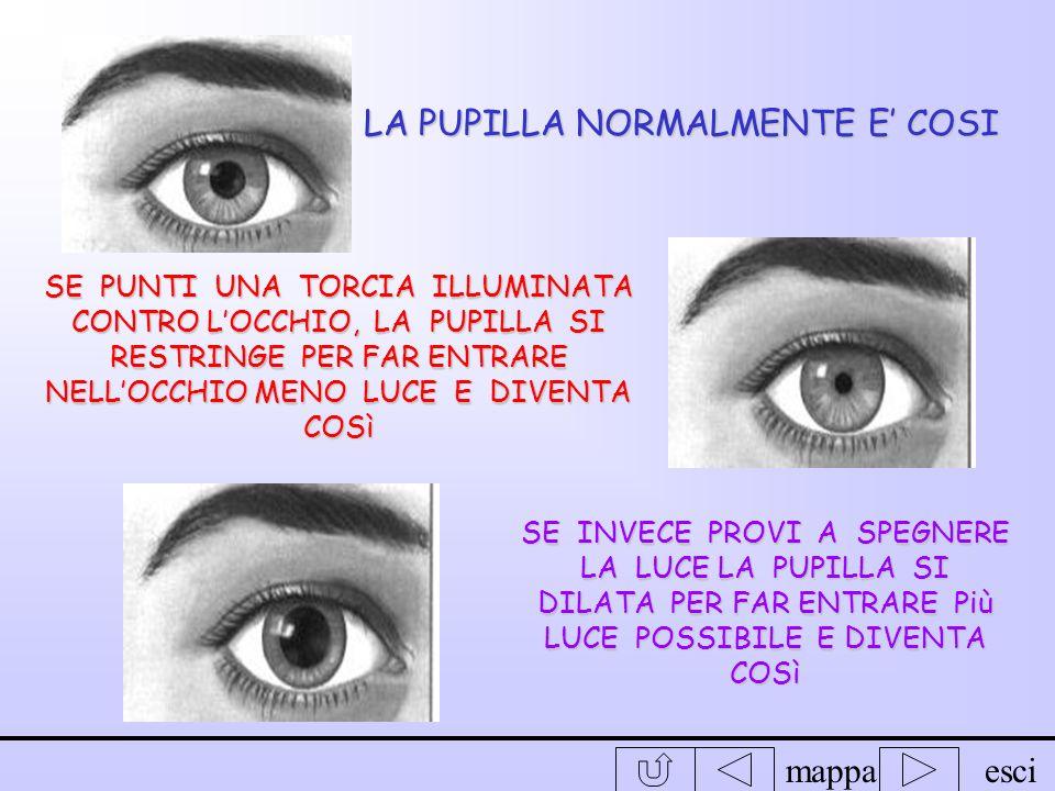 mappaesci Liride e la pupilla Abbiamo notato che il colore dei nostri occhi varia da persona a persona però tutti noi abbiamo un dischetto nero in mez
