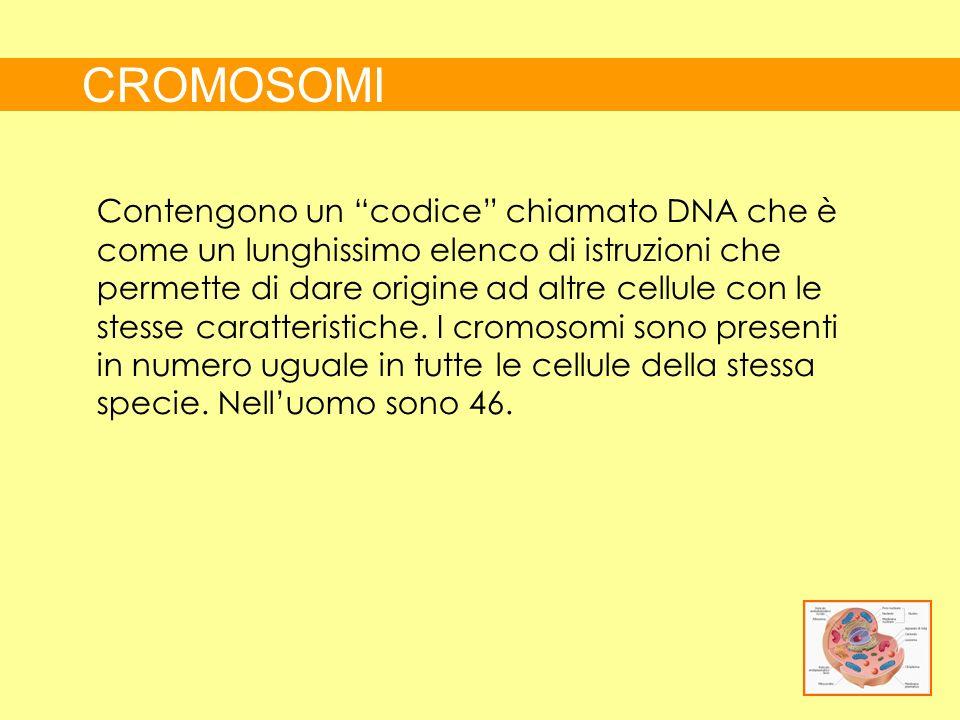 CROMOSOMI Contengono un codice chiamato DNA che è come un lunghissimo elenco di istruzioni che permette di dare origine ad altre cellule con le stesse