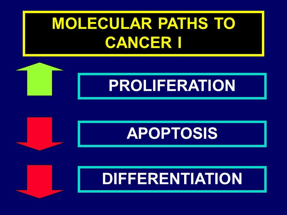 Myeloproliferative disorders CHRONIC MYELOGENOUS LEUKEMIA (CML) POLICITEMIA VERA (PV) IDYIOPATIC MYELOFIBROSIS (IMMM) ESSENTIAL THROBOCYTEMIA (TE) DISEASE SEVERITY GENETIC INSTABILITY