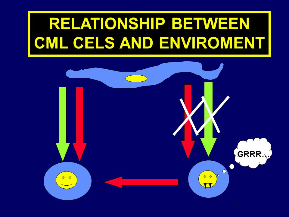 RELATIONSHIP BETWEEN CML CELS AND ENVIROMENT GRRR….