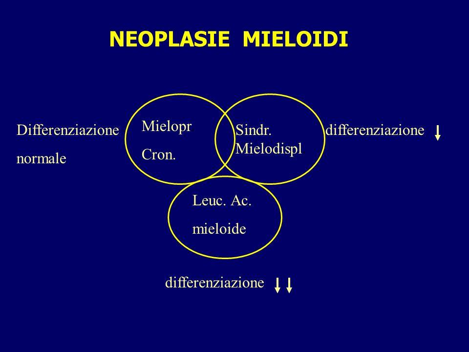 Mielofibrosi con metaplasia mieloide Fase iniziale: frequente leucocitosi, raramente piastrinosi; Hb normale o lievemente ridotta; splenomegalia lieve/moderata.