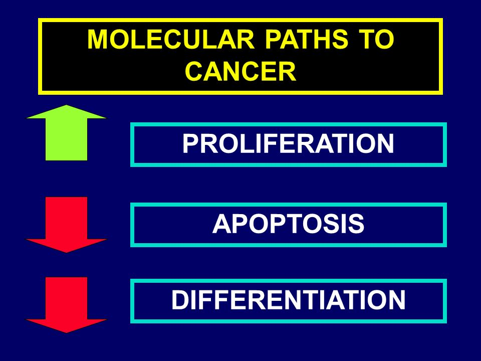 CML IN CHRONIC PHASE PROLIFERATION (loss of physiological control) APOPTOSIS DIFFERENTIATION