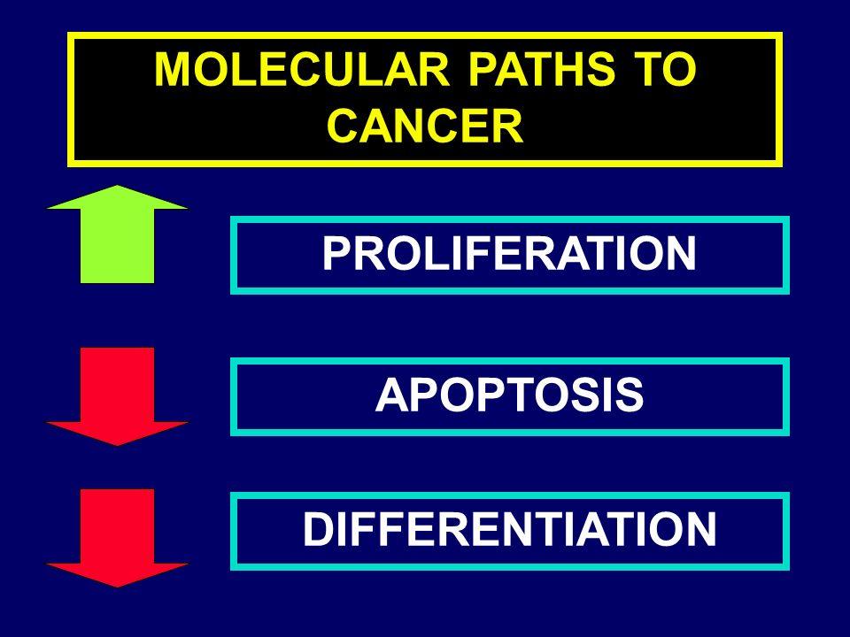 LEUCEMIA MIELOIDE CRONICA PATOGENESI - In 5% dei casi fusione genica BCR/ABL senza riscontro citogenetico del cromosoma Ph1 (casi Ph1- ma BCR/ABL+): stessa malattia, prognosi e risposta terapeutica.