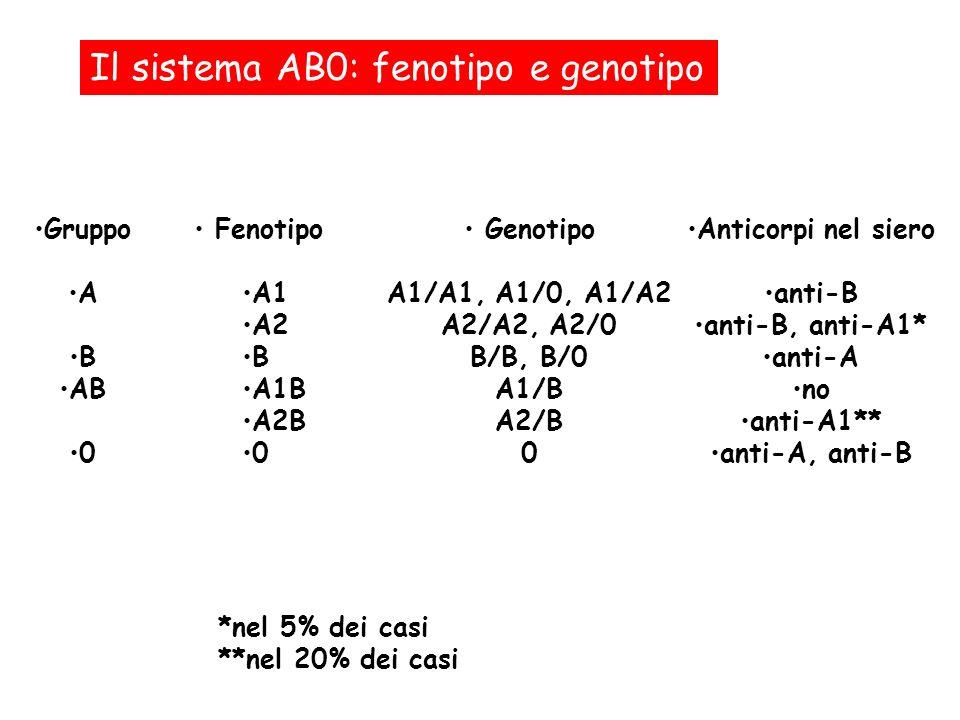 Il sistema AB0: fenotipo e genotipo Fenotipo A1 A2 B A1B A2B 0 Genotipo A1/A1, A1/0, A1/A2 A2/A2, A2/0 B/B, B/0 A1/B A2/B 0 *nel 5% dei casi **nel 20%