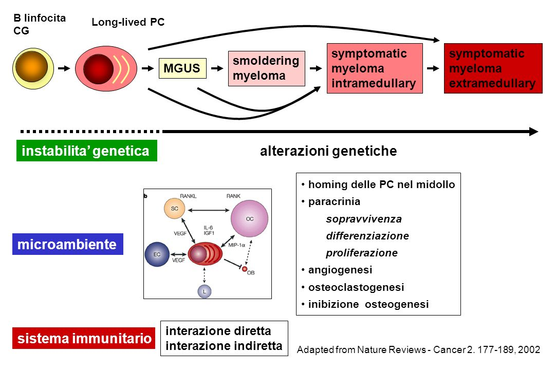 B linfocita CG MGUS smoldering myeloma symptomatic myeloma intramedullary symptomatic myeloma extramedullary Long-lived PC Adapted from Nature Reviews