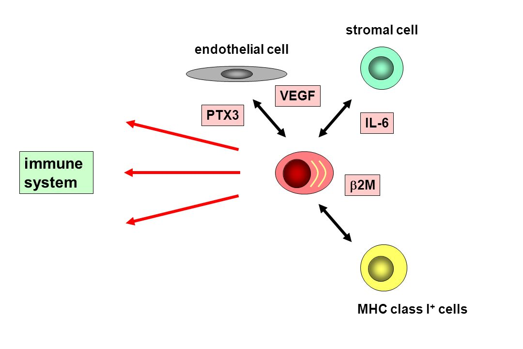 T cells VEGF IL-6 2M stromal cell MHC class I + cells endothelial cell PTX3 immune system