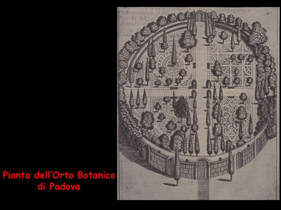 Pianta dellOrto Botanico di Padova