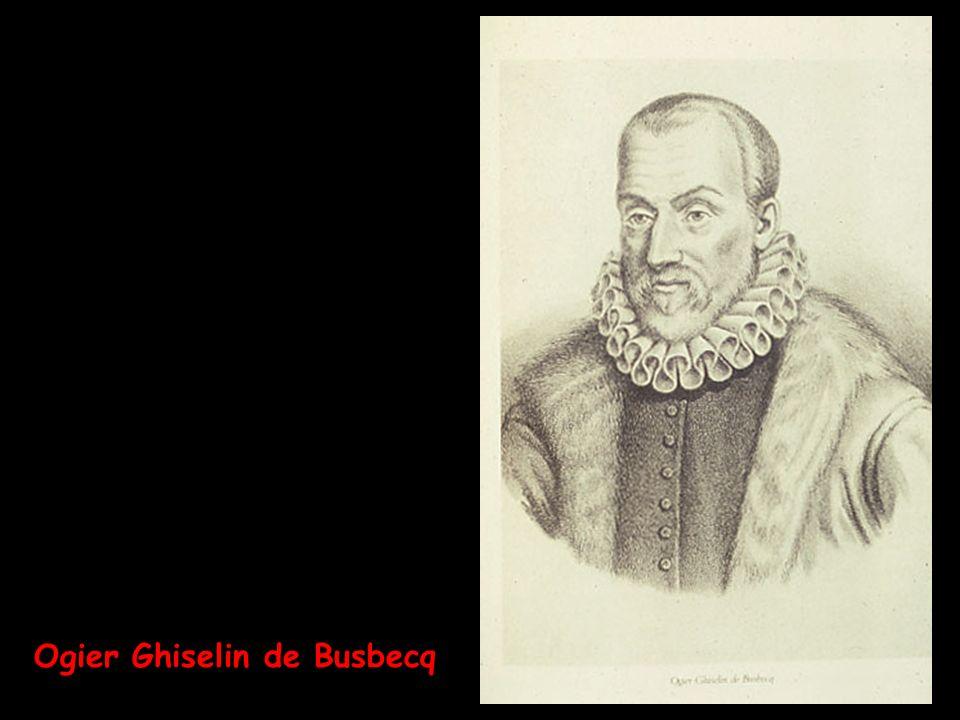 Ogier Ghiselin de Busbecq