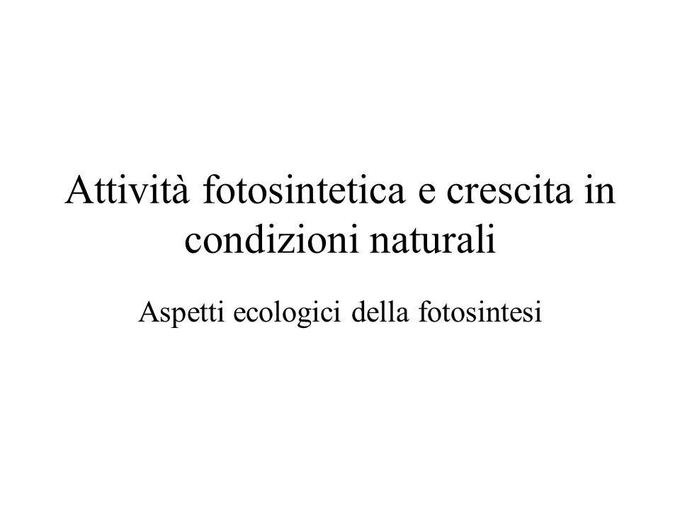 Attività fotosintetica e crescita in condizioni naturali Aspetti ecologici della fotosintesi