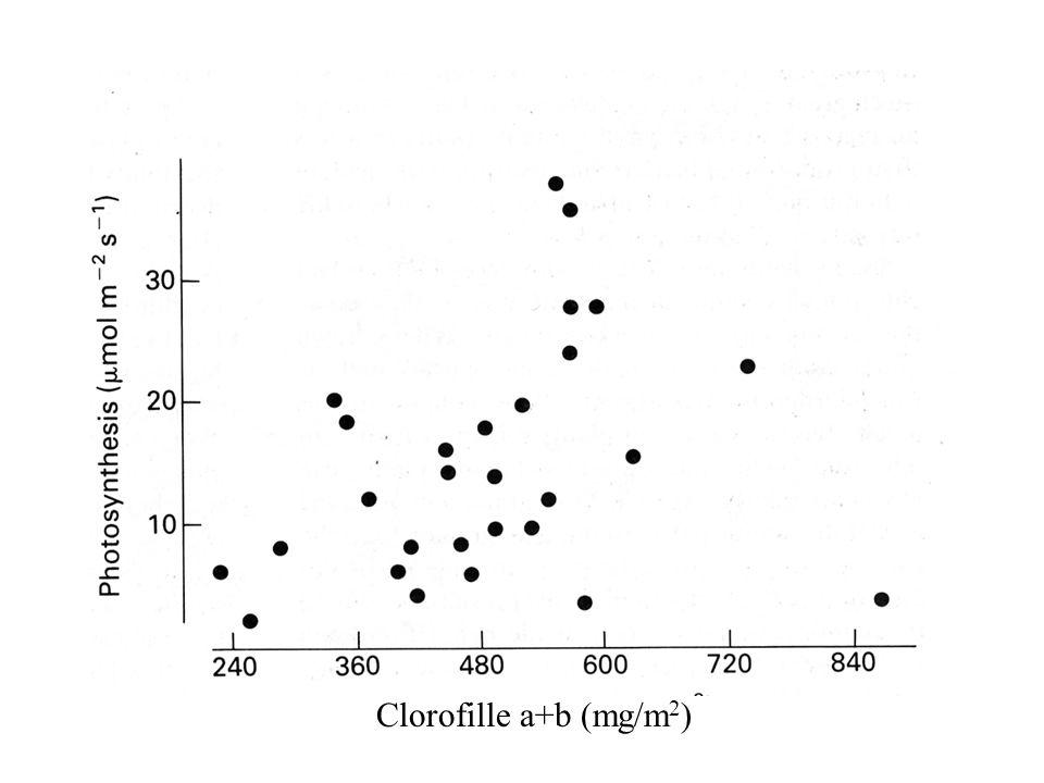 Clorofille a+b (mg/m 2 )