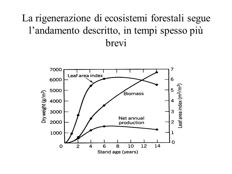La rigenerazione di ecosistemi forestali segue landamento descritto, in tempi spesso più brevi