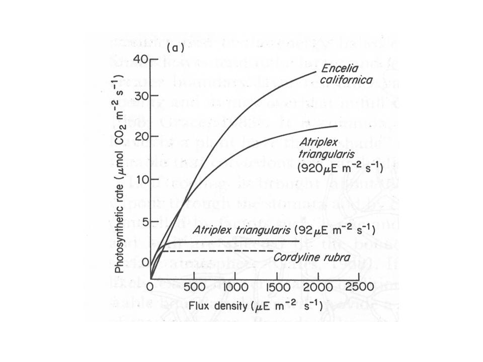 Confronto fra specie Da foglia a foglia, da individuo a individuo, da specie a specie, le curve di risposta variano.