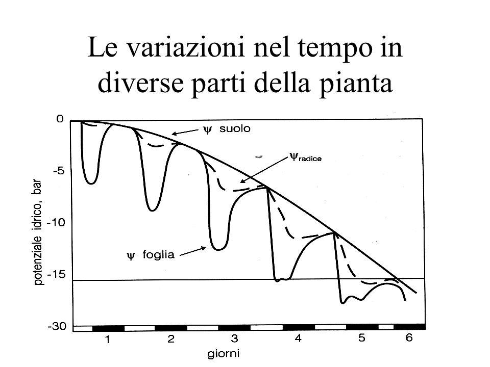 Le variazioni nel tempo in diverse parti della pianta