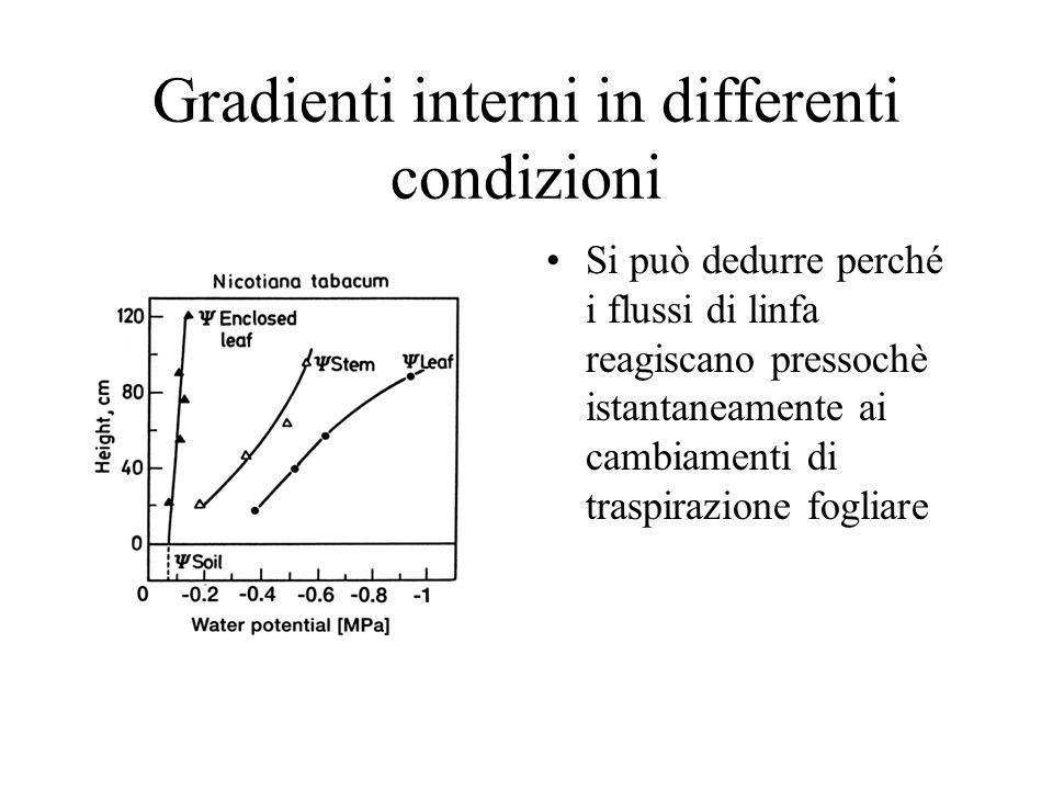 Gradienti interni in differenti condizioni Si può dedurre perché i flussi di linfa reagiscano pressochè istantaneamente ai cambiamenti di traspirazione fogliare