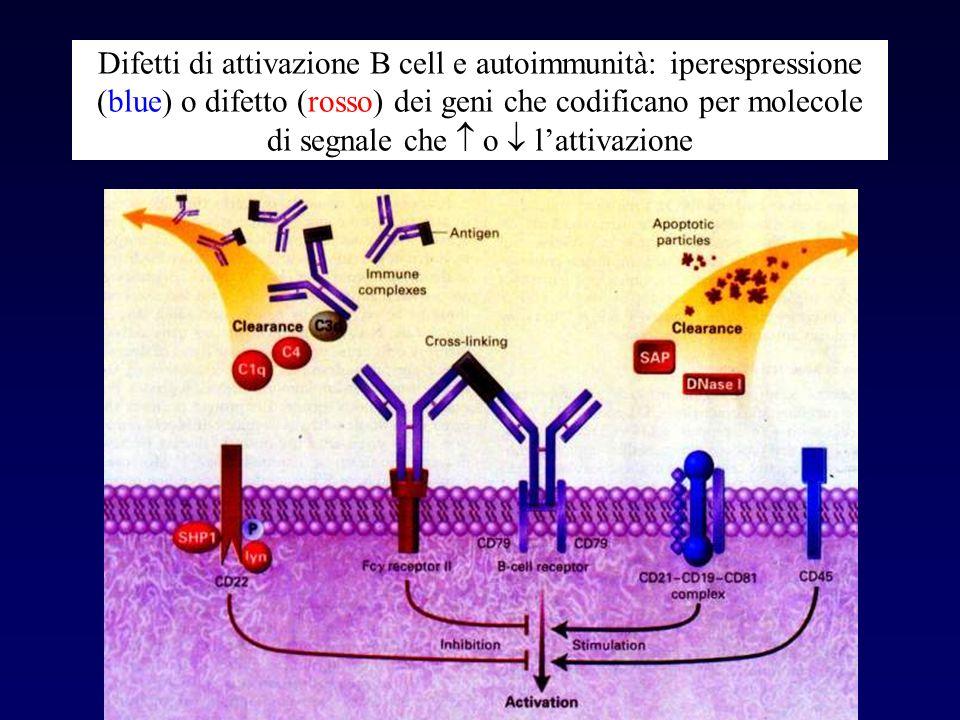 Difetti di attivazione B cell e autoimmunità: iperespressione (blue) o difetto (rosso) dei geni che codificano per molecole di segnale che o lattivazi