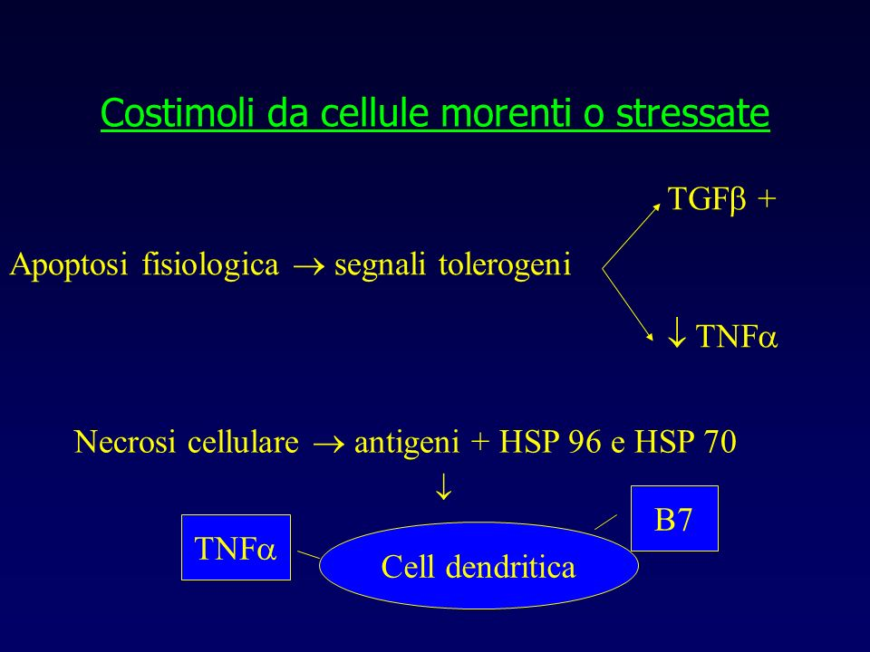 Costimoli da cellule morenti o stressate Apoptosi fisiologica segnali tolerogeni TGF + TNF Necrosi cellulare antigeni + HSP 96 e HSP 70 Cell dendritic