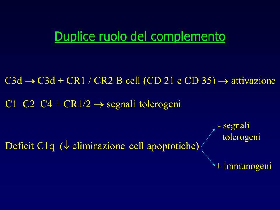 Duplice ruolo del complemento C3d C3d + CR1 / CR2 B cell (CD 21 e CD 35) attivazione C1 C2 C4 + CR1/2 segnali tolerogeni Deficit C1q ( eliminazione ce