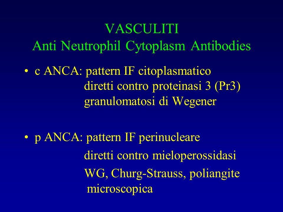 VASCULITI Anti Neutrophil Cytoplasm Antibodies c ANCA: pattern IF citoplasmatico diretti contro proteinasi 3 (Pr3) granulomatosi di Wegener p ANCA: pa