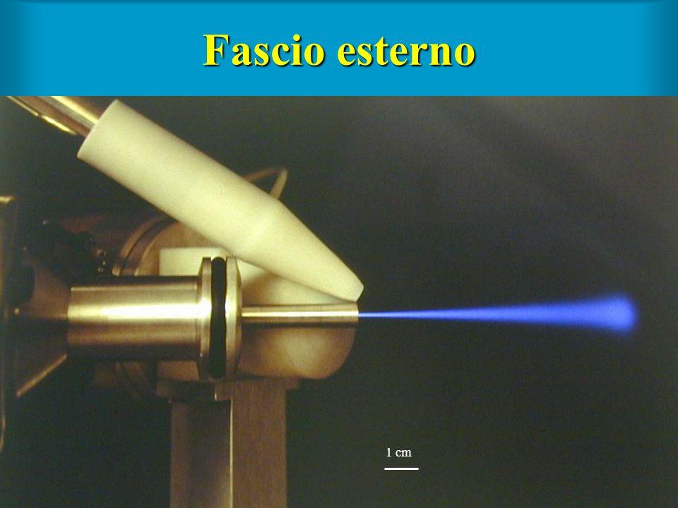 Fascio esterno 1 cm