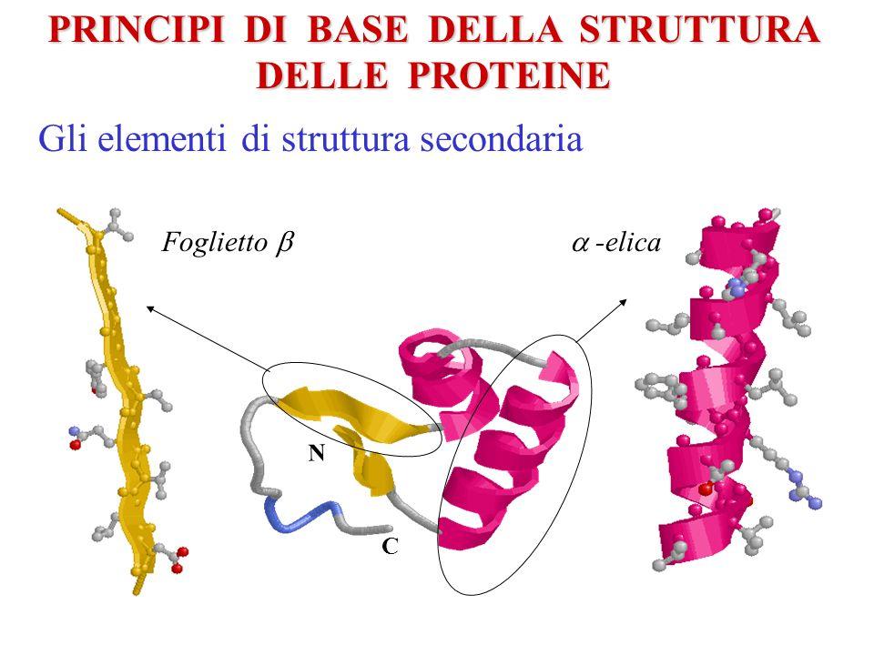 La cinetica del Folding: I siti di iniziazione La catena La predizione del Protein Folding La proteina nativa Il processo di folding