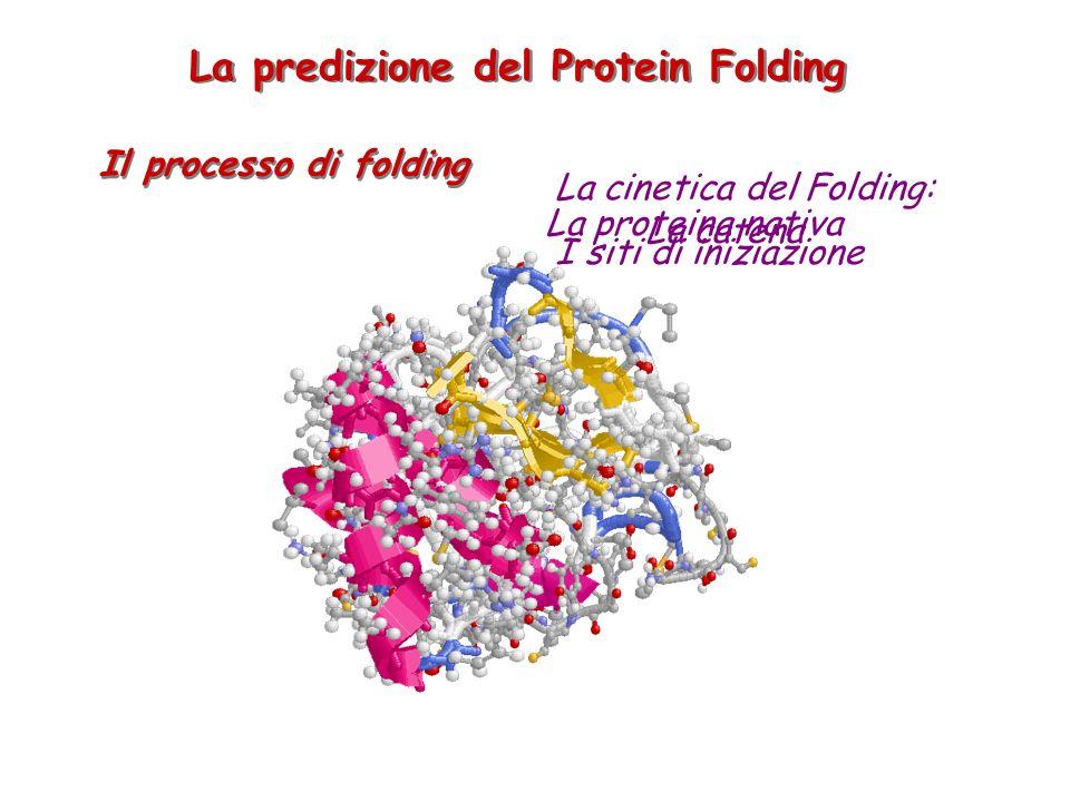 Le Reti Neurali a Bologna predicono: La struttura secondaria delle proteine I siti di iniziazione del protein folding La topologia delle proteine di membrana all alpha and all beta (ISMB BEST PAPER AWARD 2002) La presenza dei peptidi segnale Lo stato di legame delle cisteine e la topologia dei ponti a zolfo Le mappe di contatto delle proteine (BEST PREDICTOR of the CATEGORY at CASP4) Le superfici di interazione tra proteine