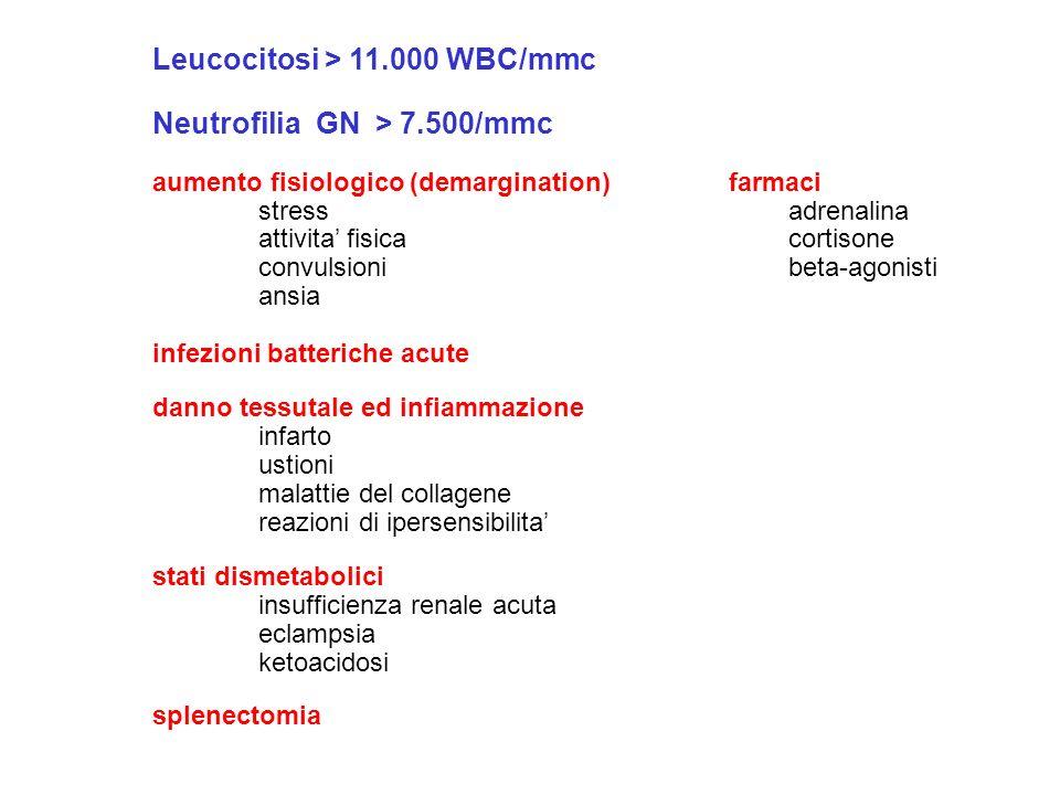 Leucocitosi > 11.000 WBC/mmc Neutrofilia GN > 7.500/mmc aumento fisiologico (demargination) farmaci stress adrenalina attivita fisicacortisone convuls