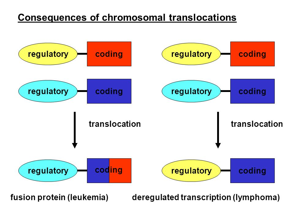 Consequences of chromosomal translocations regulatory coding regulatory coding regulatory coding regulatory coding regulatory coding regulatory coding