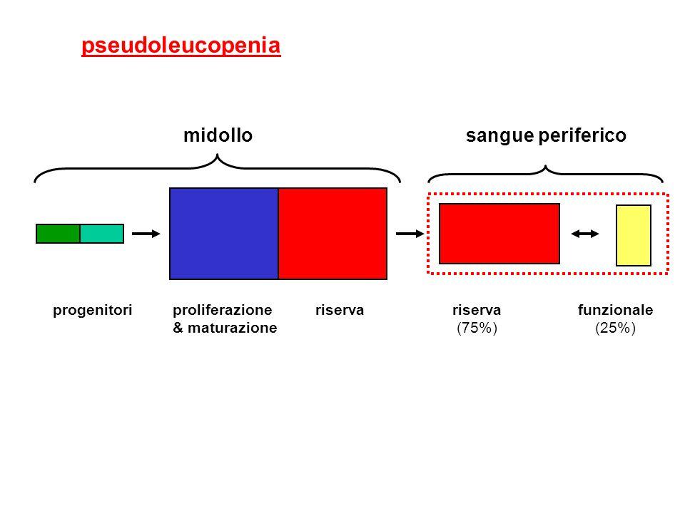proliferazione & maturazione funzionale (25%) riserva (75%) riservaprogenitori midollosangue periferico pseudoleucopenia
