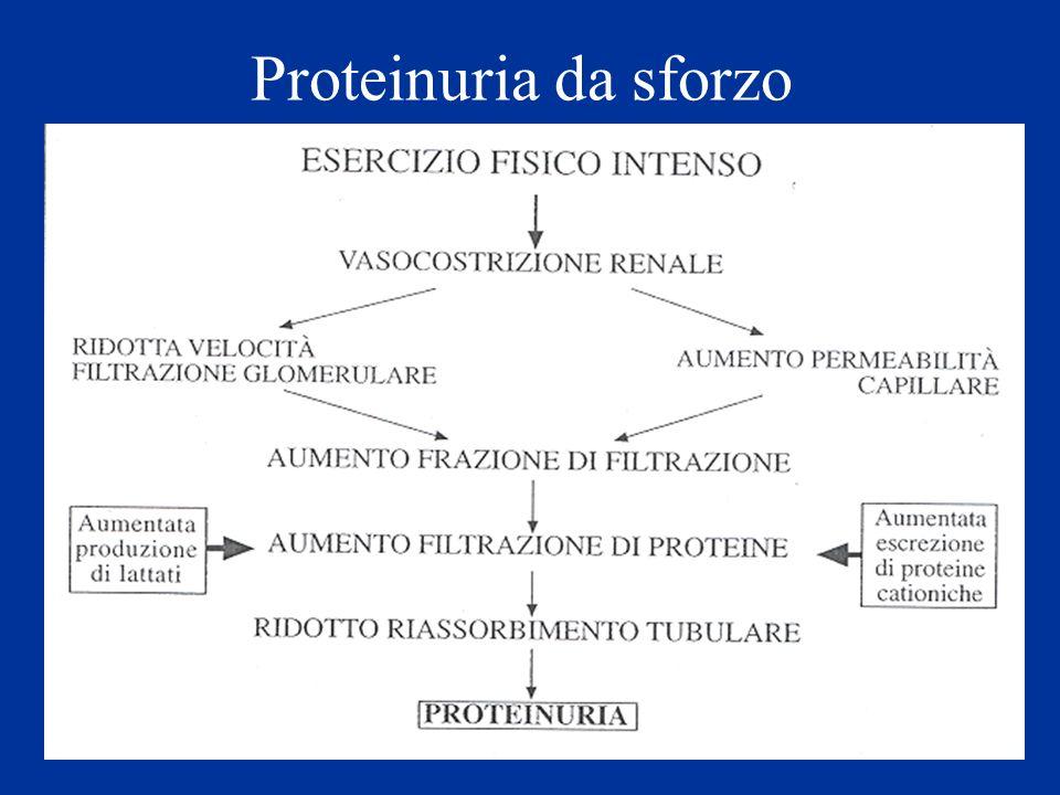 Proteinuria da sforzo