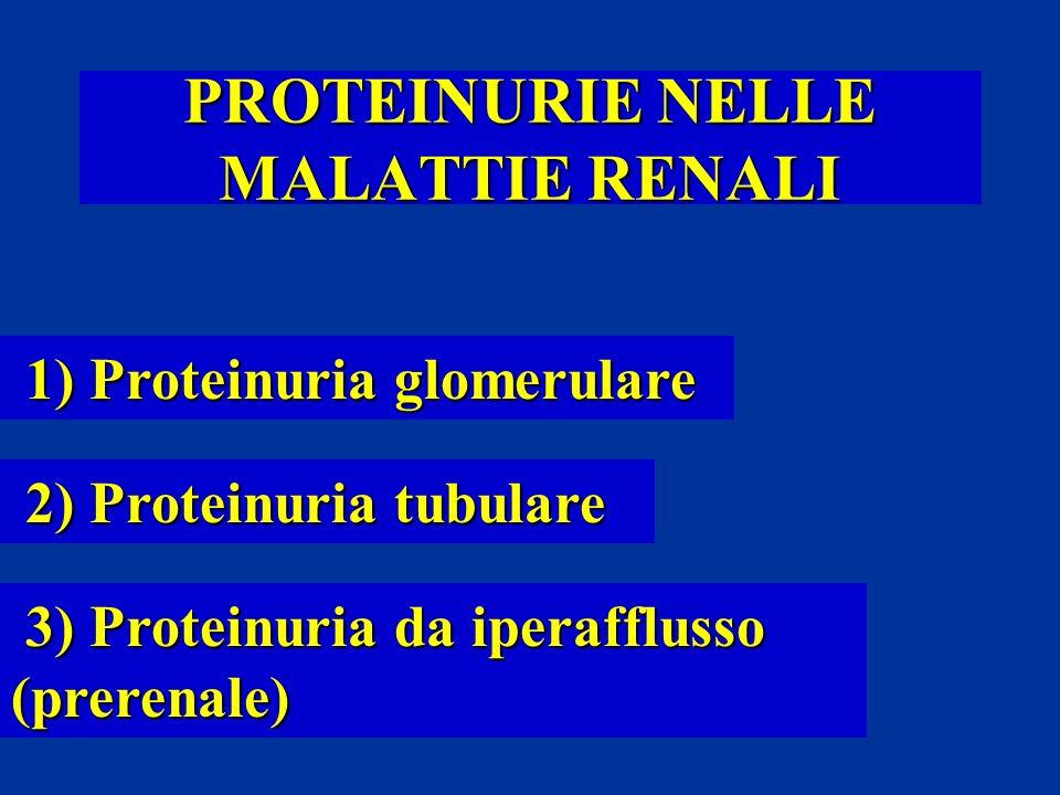 PROTEINURIE NELLE MALATTIE RENALI 1) Proteinuria glomerulare 1) Proteinuria glomerulare 2) Proteinuria tubulare 2) Proteinuria tubulare 3) Proteinuria