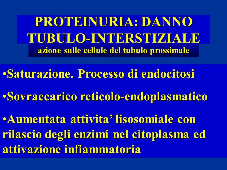 PROTEINURIA: DANNO TUBULO-INTERSTIZIALE azione sulle cellule del tubulo prossimale Saturazione. Processo di endocitosiSaturazione. Processo di endocit