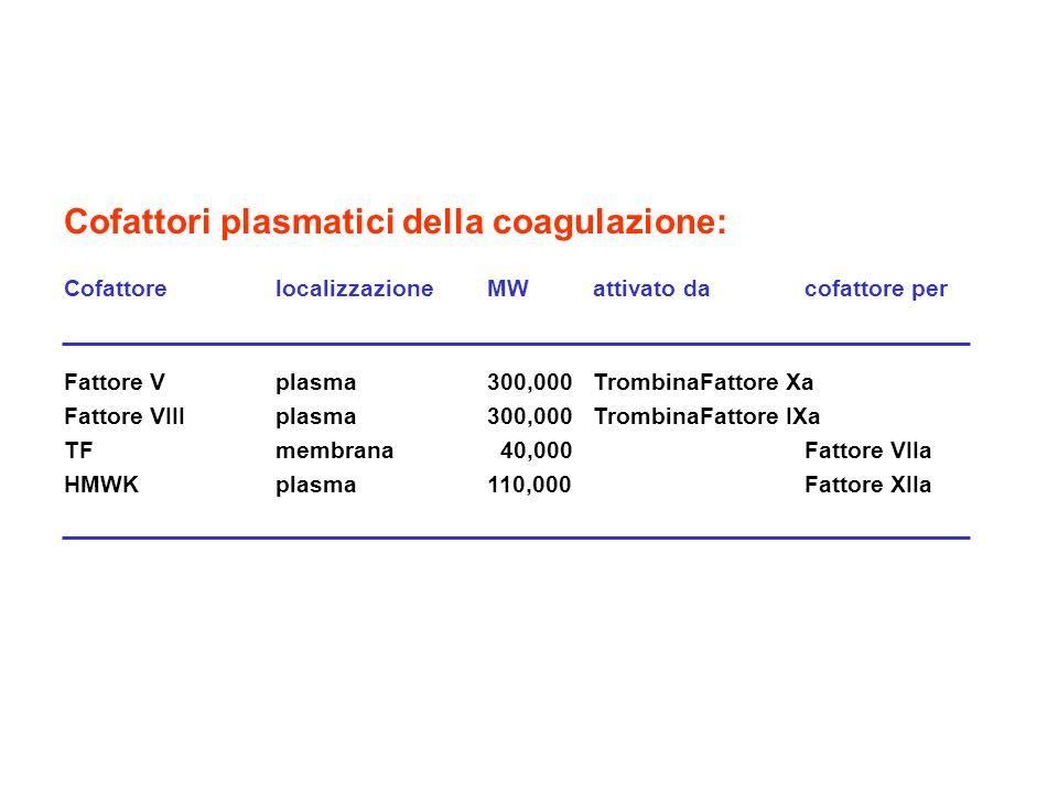 Cofattori plasmatici della coagulazione: CofattorelocalizzazioneMWattivato dacofattore per Fattore Vplasma300,000TrombinaFattore Xa Fattore VIIIplasma