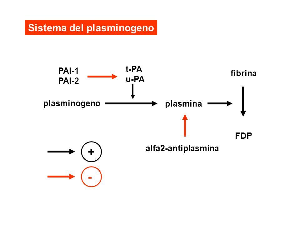 Sistema del plasminogeno plasminogeno plasmina fibrina FDP alfa2-antiplasmina t-PA u-PA PAI-1 PAI-2 + -