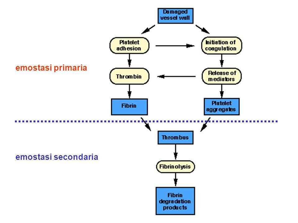 emostasi primaria emostasi secondaria