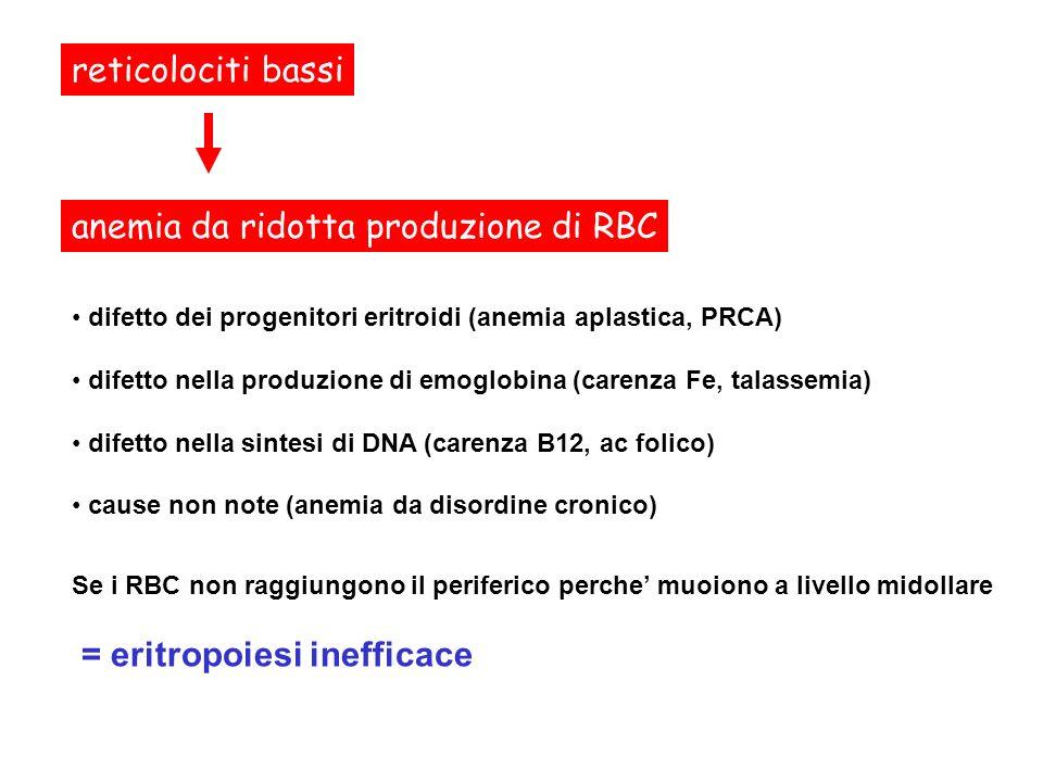 MCV: microcitosi (<80 fl); normocitosi (80-95 fl); macrocitosi (> 95 fl); reticolociti bassi anemia da ridotta produzione di RBC