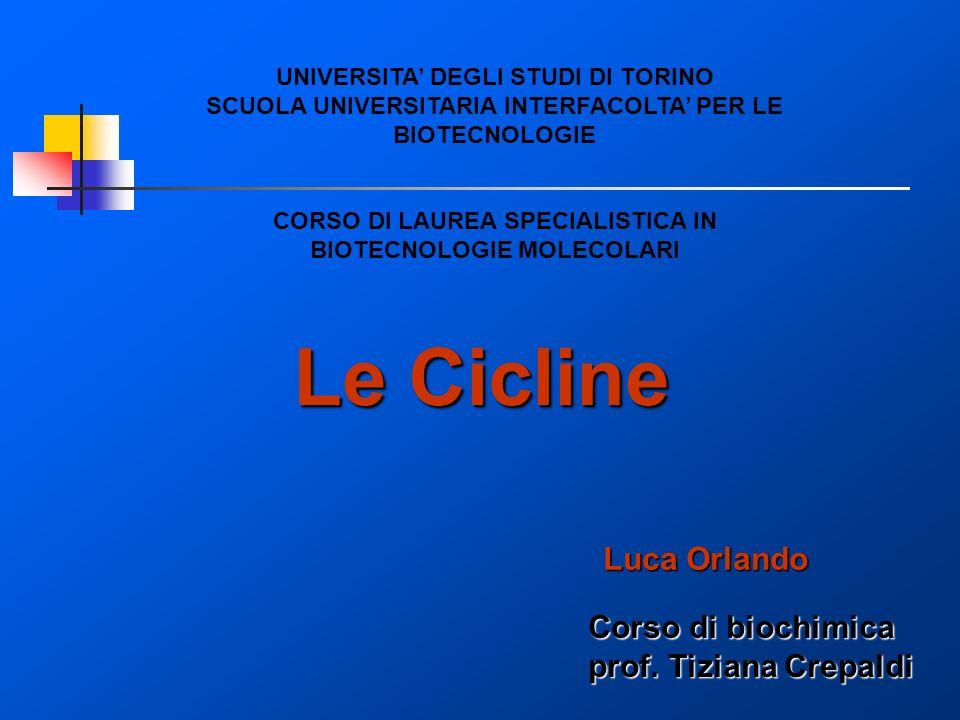 Le Cicline UNIVERSITA DEGLI STUDI DI TORINO SCUOLA UNIVERSITARIA INTERFACOLTA PER LE BIOTECNOLOGIE CORSO DI LAUREA SPECIALISTICA IN BIOTECNOLOGIE MOLE