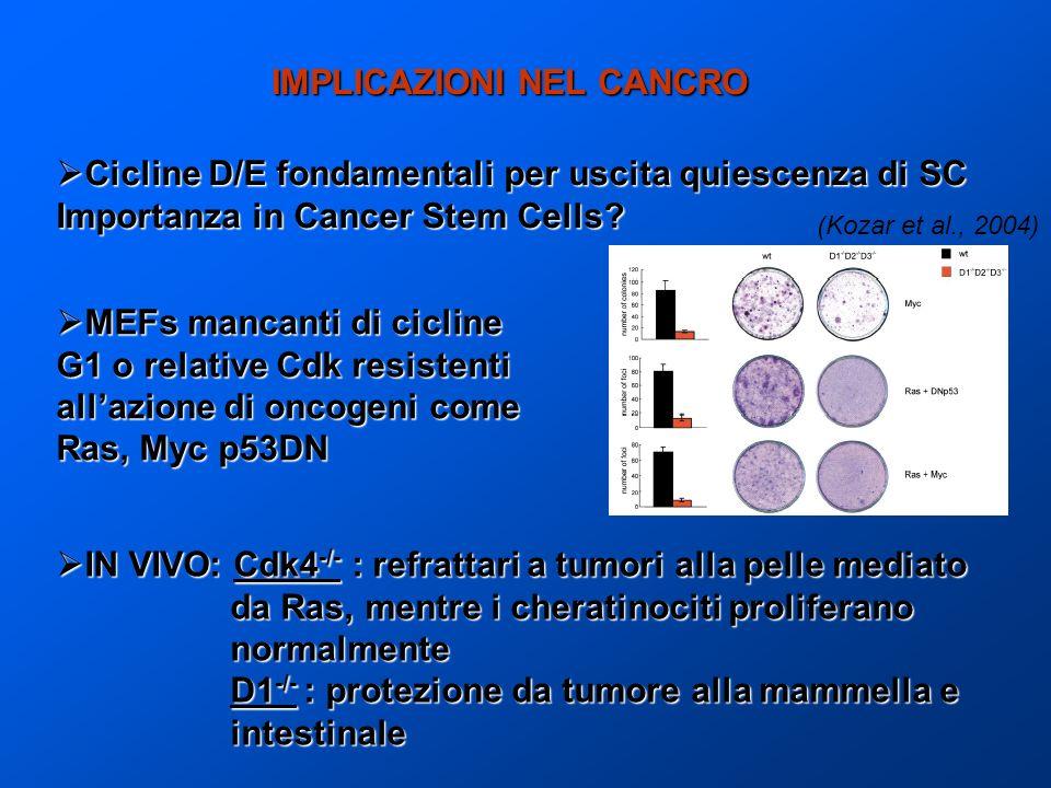 IMPLICAZIONI NEL CANCRO Cicline D/E fondamentali per uscita quiescenza di SC Cicline D/E fondamentali per uscita quiescenza di SC Importanza in Cancer