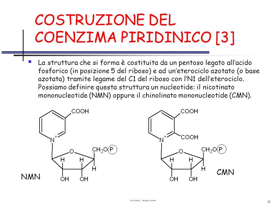 Prof. G. Gilardi - Biological Chemistry 11 COSTRUZIONE DEL COENZIMA PIRIDINICO [3] La struttura che si forma è costituita da un pentoso legato allacid