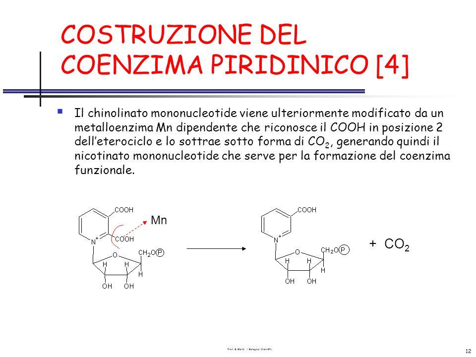 Prof. G. Gilardi - Biological Chemistry 12 COSTRUZIONE DEL COENZIMA PIRIDINICO [4] Il chinolinato mononucleotide viene ulteriormente modificato da un