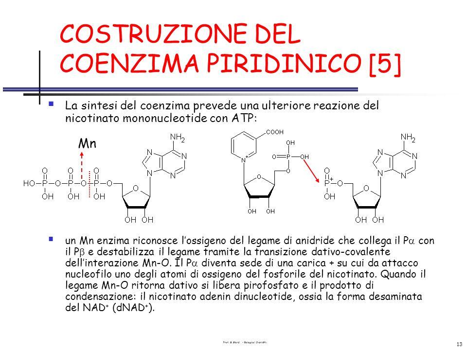 Prof. G. Gilardi - Biological Chemistry 13 COSTRUZIONE DEL COENZIMA PIRIDINICO [5] La sintesi del coenzima prevede una ulteriore reazione del nicotina