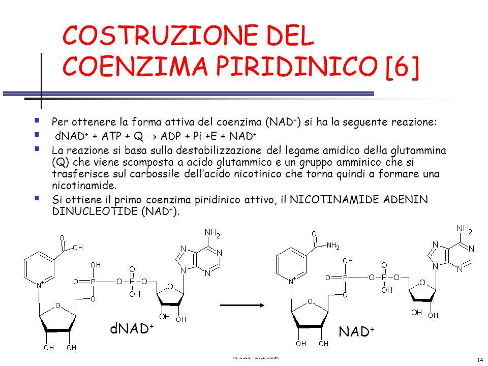 Prof. G. Gilardi - Biological Chemistry 14 COSTRUZIONE DEL COENZIMA PIRIDINICO [6] Per ottenere la forma attiva del coenzima (NAD + ) si ha la seguent