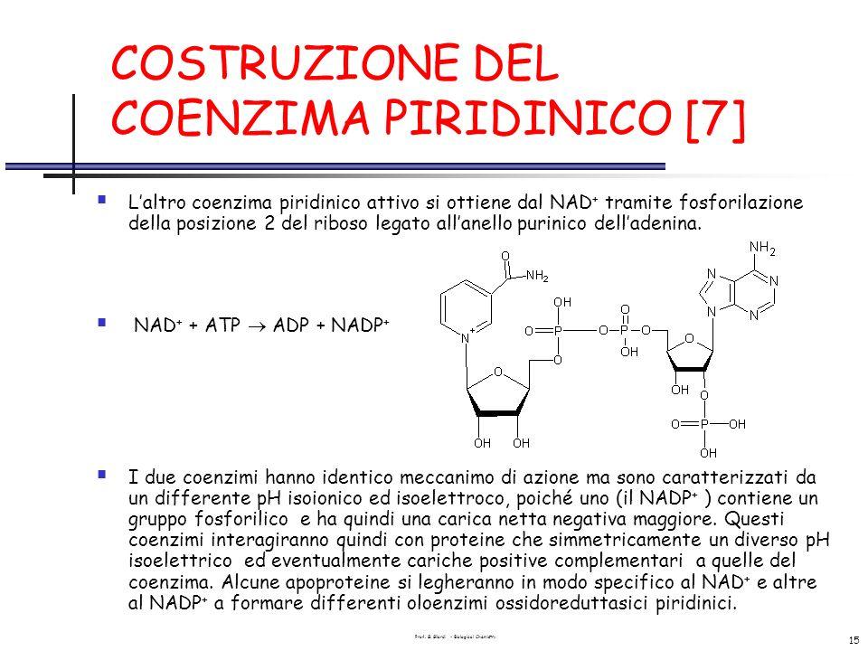 Prof. G. Gilardi - Biological Chemistry 15 COSTRUZIONE DEL COENZIMA PIRIDINICO [7] Laltro coenzima piridinico attivo si ottiene dal NAD + tramite fosf